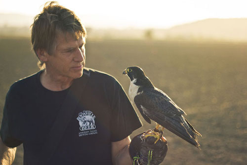 VINEYARD FALCONRY <br><small>Learn about John Hawley's work with birds of prey</small>