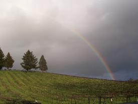 Rainbow Over Alegría Vineyards