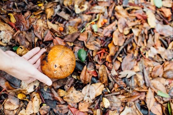 Picking a mushroom