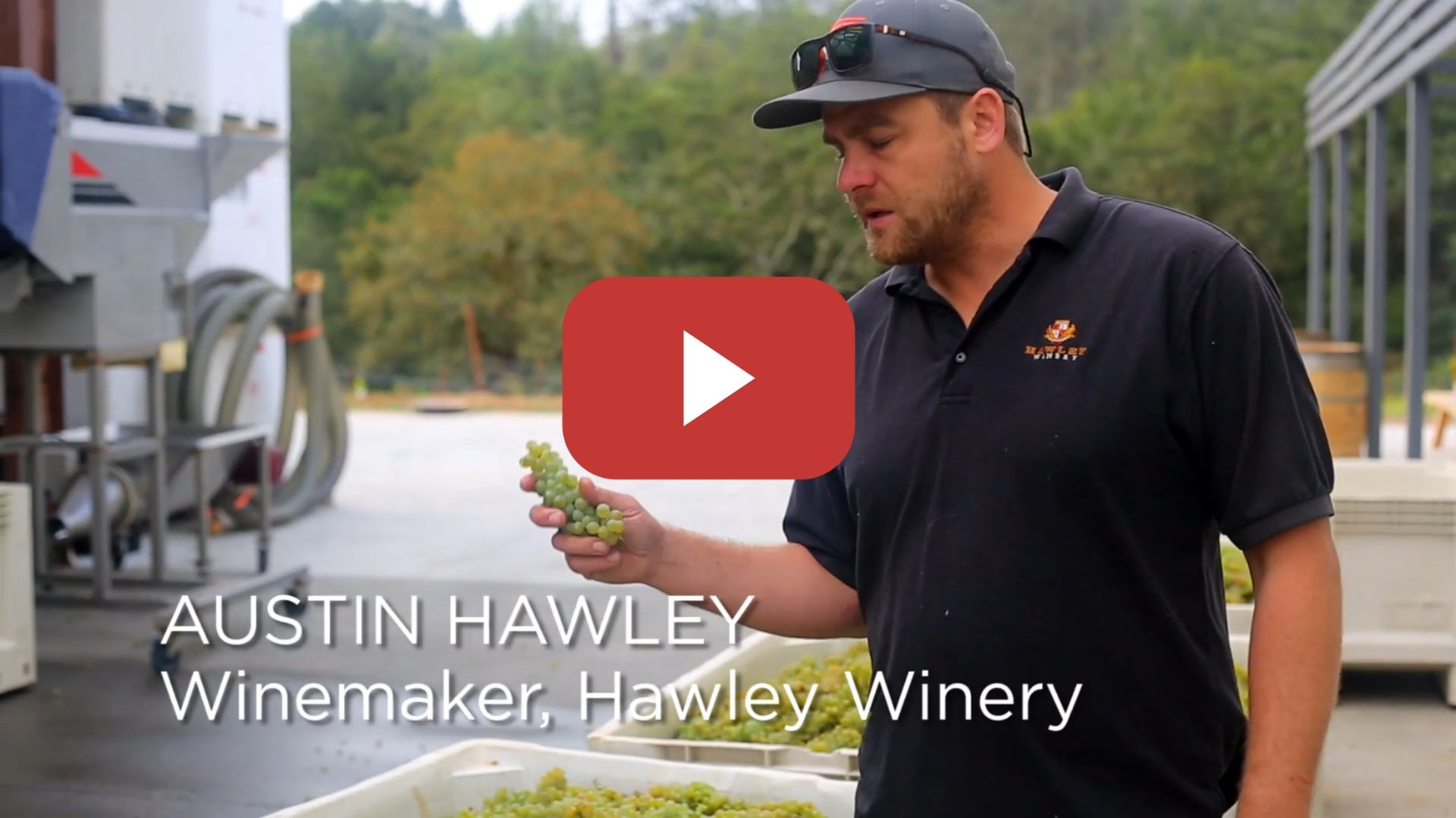 Austin Hawley introduces the First Grapes of 2019 Harvest