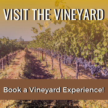 Visit The Vineyard