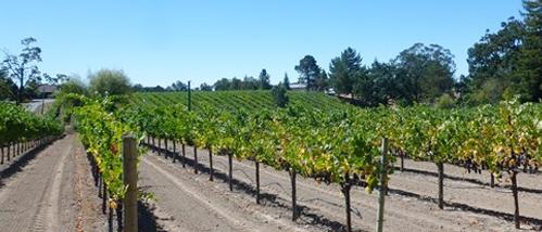 View of Leras Family Vineyard