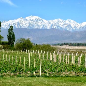 Mendoza Vines