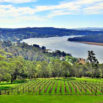 Tasmania vines