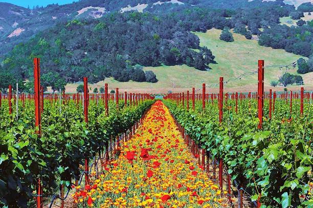 Spring flowers in vineyard