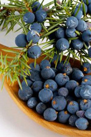 Juniper Berries - Hand Picked