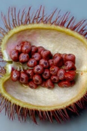 Annatto Seed (whole)