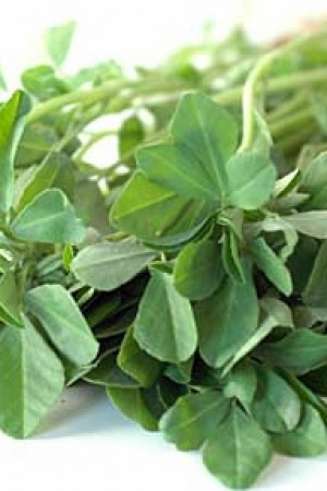Fenugreek Leaves Methi