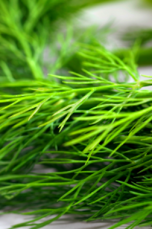 Dill Green Tips