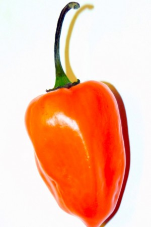 Chili Habanero (whole)