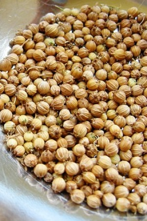 Coriander Seed Indian