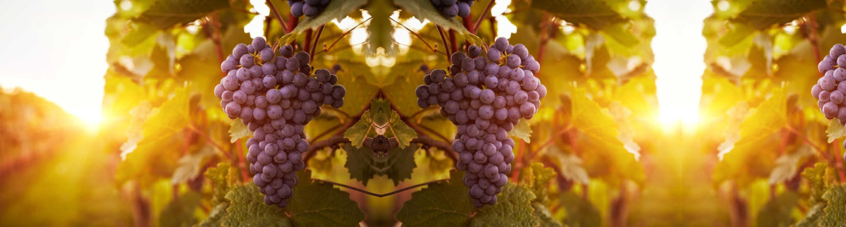 Passion Pinot Noir